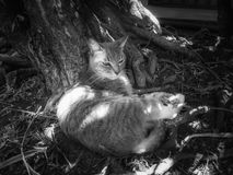 Een grijze kat die onder een boom rusten royalty-vrije stock foto