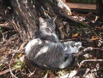 Een grijze kat die onder een boom rusten stock afbeeldingen
