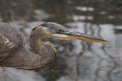 Vogel op het meer Stock Fotografie