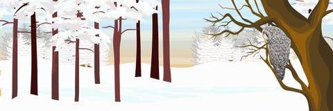 Een grijze uil zit op een boom in een bos van de de winterpijnboom royalty-vrije illustratie