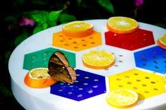 Een grijze vlinder in het nemen van jus d'orange Stock Foto