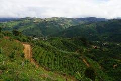 Een grint landelijke weg door bergaanplanting in Costa Rica royalty-vrije stock afbeelding