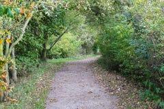 Een grintweg die door bomen leiden Stock Fotografie
