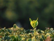 Een groen blad in grond Royalty-vrije Stock Afbeelding