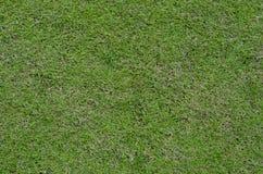 Een Groen Gras op een Gebied Stock Fotografie