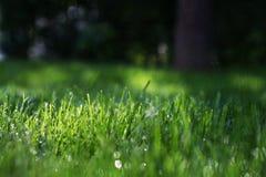 Een groen gras op het gazon met dauw en lichtstralen Stock Foto's