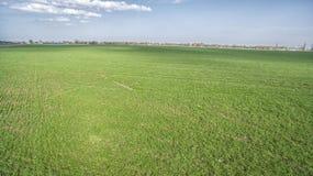 Een groen landbouwgebied Stock Foto