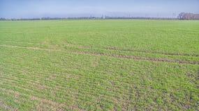 Een groen landbouwgebied Stock Afbeeldingen