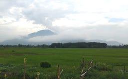 Een groen padieveld met de blauwe hemel stock fotografie