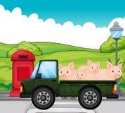 Een groen voertuig met varkens bij de rug Stock Afbeeldingen
