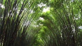 Een groene bamboetunnel Stock Afbeeldingen