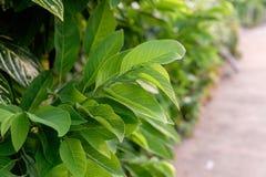 Een groene bladachtergrond Stock Foto's