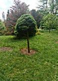 Een groene boom royalty-vrije stock foto