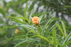 Een groene die installatie tijdens een zomer door een oranje bloem wordt gekenmerkt royalty-vrije stock fotografie