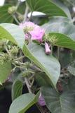 Een groene die installatie tijdens een zomer door roze bloemen wordt gekenmerkt stock fotografie