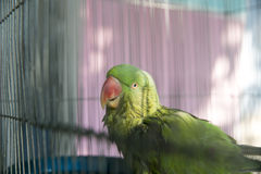 Een groene die papegaai in een staalkooi wordt opgesloten en het staren bij de camera royalty-vrije stock afbeelding