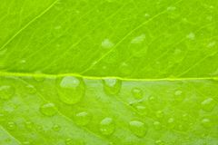 Een groene fotomacro van blad Royalty-vrije Stock Fotografie