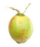Een groene kokosnoot Royalty-vrije Stock Afbeelding