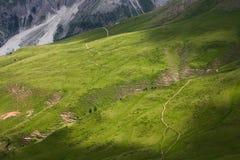 Een groene vallei in Dolomiet Stock Fotografie