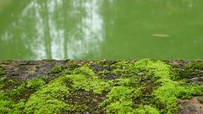 Een groene vijver is behandeld met mos stock fotografie
