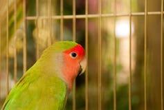 Vogel in een birdcage Stock Afbeeldingen