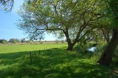 Een groene weg langs de rivier Ciane Stock Foto's