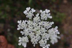 Een groep die witte bloem zich alleen bevinden stock foto