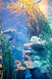 Een groep diepzeevissen Stock Afbeeldingen