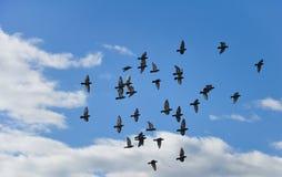 Een groep duif vliegt in de hemel royalty-vrije stock foto