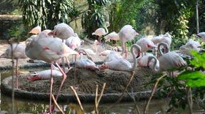 Een groep flamingoes Royalty-vrije Stock Afbeeldingen