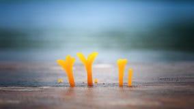 Een groep gele paddestoelpaddestoel Stock Foto's