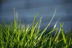 Een groep gras Royalty-vrije Stock Foto's