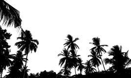 Een groep hoogte - kwaliteitssilhouetten van tropische strandpalmen Coco Stock Fotografie