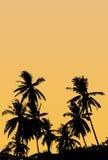 Een groep hoogte - kwaliteitssilhouetten van tropische strandpalmen Coco Stock Afbeelding