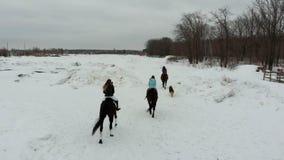 Een groep jonge vrouwen die paarden berijden op een sneeuwgebied Achter mening stock footage