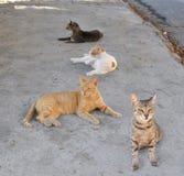 Een groep katten Stock Foto's