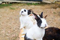 Een groep konijn in de tuin stock afbeeldingen