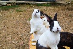 Een groep konijn in de tuin royalty-vrije stock afbeelding