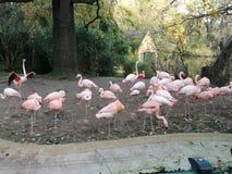 Een groep mooie roze flamingo's royalty-vrije stock afbeeldingen