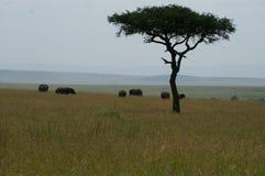 Een groep olifanten Stock Fotografie