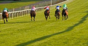 Een groep paarden en jockeys van de rug stock afbeeldingen