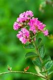 Een groep roze bloem Stock Fotografie