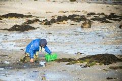 Een groep schaaldieren verzamelt tweekleppige schelpdieren Stock Afbeelding