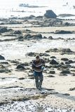 Een groep schaaldieren verzamelt tweekleppige schelpdieren Royalty-vrije Stock Foto