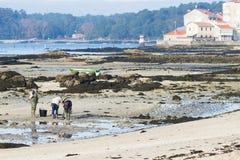 Een groep schaaldieren verzamelt tweekleppige schelpdieren Royalty-vrije Stock Foto's