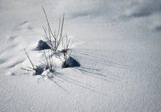 Een groep struiken in de sneeuw Royalty-vrije Stock Foto's