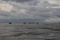 Een groep toeristen loopt at low tide op de zeebedding van Holland aan het eiland in slecht weer en regen royalty-vrije stock afbeeldingen