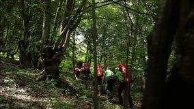 Een groep toeristen met rugzakken gaat door het hout, steadicam schot stock footage