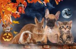 Een groep verschillende huisdieren op Halloween royalty-vrije stock foto's