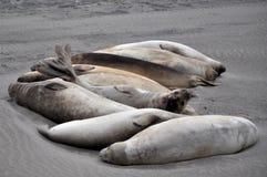 Een groep zeeleeuwen Royalty-vrije Stock Foto